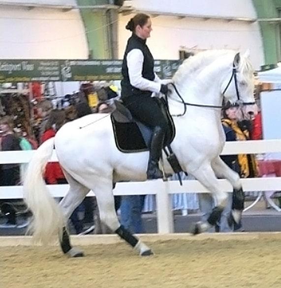 Andrea Schmitz, Top-Reiterinnen in der Barockszene