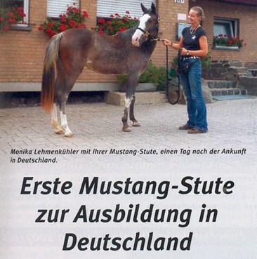 Bericht Cavallo Mustang Einleitung