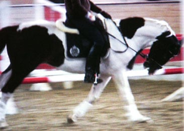 FN Testpferd vorgestellt mit Gebiss LDR