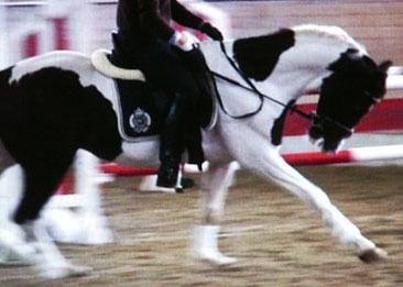 FN Testpferd vorgestellt mit Gebiss in der Rollkur