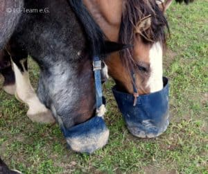 Fressbeutel Pferde in Aktion