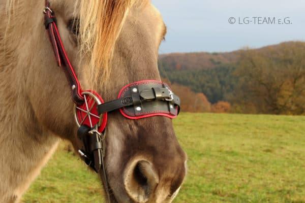 LG PLUS am Pferd rot-schwarz