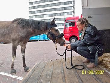 Mustangstute Verladen Flughafen Amsterdam