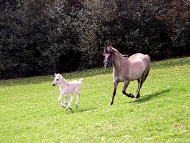 Mutter und Sohn Weide