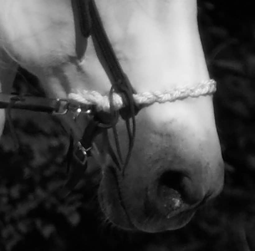 Nasenband erster gebissloser Zaum von Monika Lehmenkühler