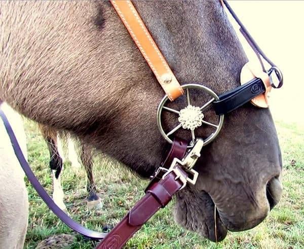 Nasenpad gepolster am Pferd gepolstert