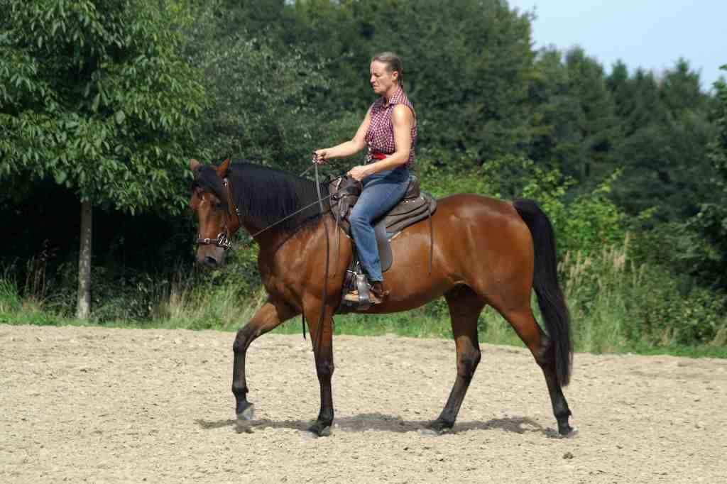 Quarter Horse lernt Übertreten ohne Gebiss