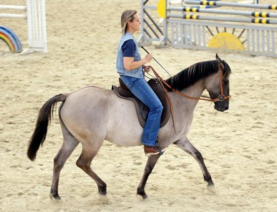 Sorraia Mustang Stute Dressur