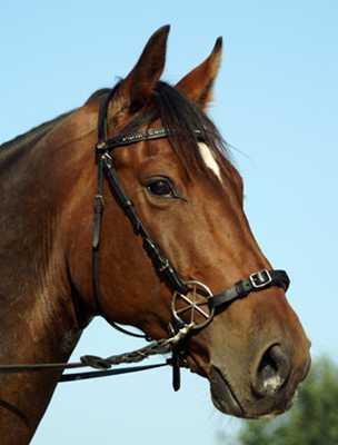 Vertrauen des Pferdes in den Reiter