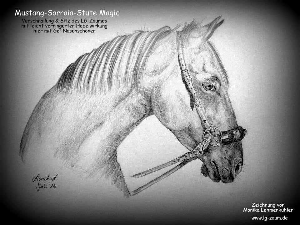 Zeichnung Pferd mit LG-Zaum Monika Lehmenkuehler